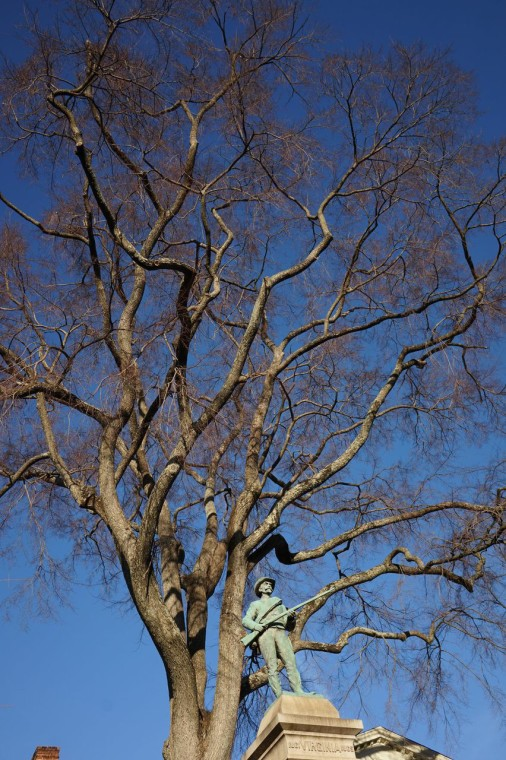 Elm, American   Landmark Tree!